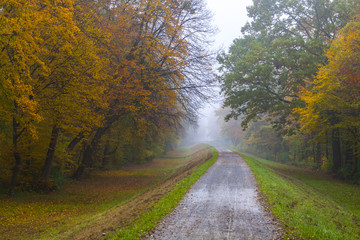 Embankment road through the autumn forest