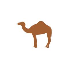 Silhouette camel.
