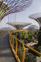 Giant trees at gardens by the bay