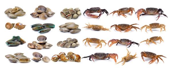 crab and enamel venus shell, Clam shellfish, Surf clam, mussel,