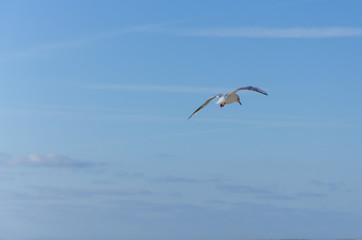 Une mouette contre un ciel bleu.
