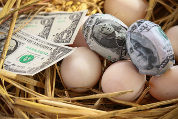 dollar Banknote in nest eggs, Growing of business and genesis Business, New business starting by banknotes, Business concept.