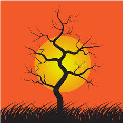Parched dead tree