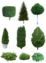 Set of trees and shrubs. Set of various evergreen trees and shrubs for the garden design.