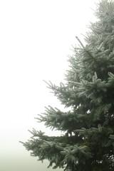 Christmas tree in a foggy haze