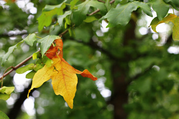 Green and yellow leaves on the branch in the autumn forest