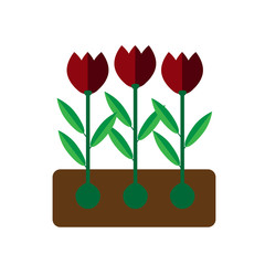 Tulip grows on white background flat