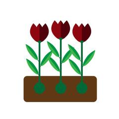 Tulip grows on white background flat