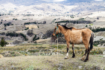 Horse at the rim of Quilotoa crater, Ecuador