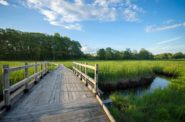Scenic Boardwalk Footpath through Estuary in Summer - Peaceful Nature Trail with Bridge over Water