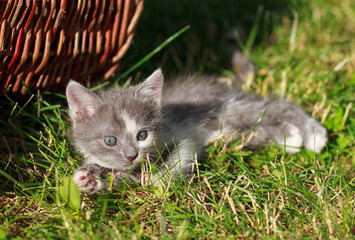 cat lying on the grass near the basket