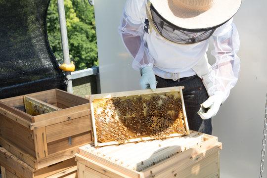 日本の養蜂業
