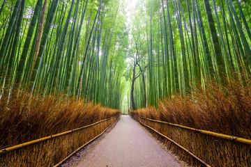 Foto auf Acrylglas Bambus Path to bamboo forest, Arashiyama, Kyoto, Japan.
