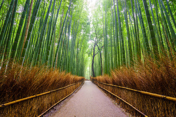 Photo sur Plexiglas Bamboo Path to bamboo forest, Arashiyama, Kyoto, Japan.