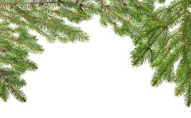 lush green fir branches half frame