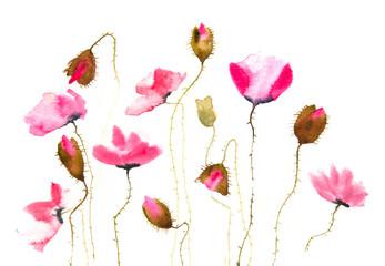 Beautiful pink poppy flowers