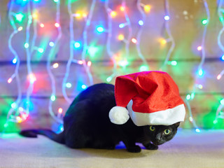 black cat in Santa Claus red hat