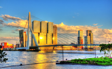Printed roller blinds Rotterdam Erasmus Bridge in Rotterdam - Netherlands