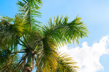Palm Tree on Blue Sky. Background for Holiday Travel Card