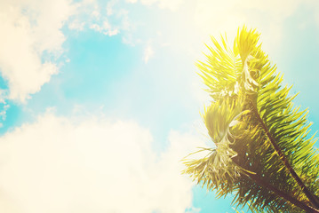 Two Leaves of Palm Trees on Blue Sky. Toned Effect