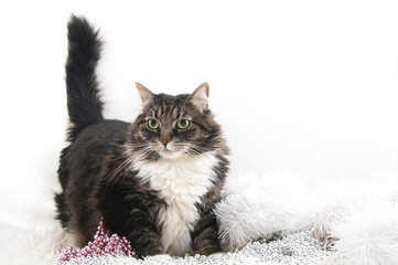 Wall Mural - Black fluffy cat with Christmas decorations..