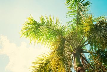 Leaves of Palm Trees in Sun Light. Retro Style