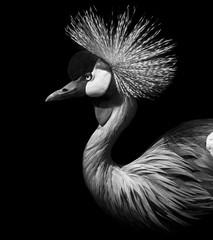 Crane Crowned