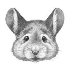 Portrait of Mouse. Hand drawn illustration.