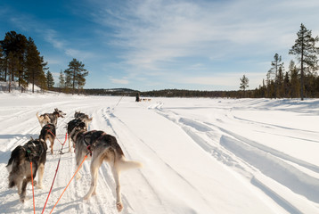 Dog sledding across Swedish Lapland in winter