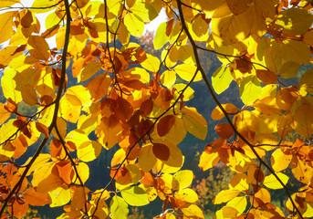 Bunter Herbstblätter