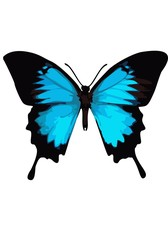 Swallowtail butterfly, butterfly blue on a white background.