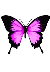 Swallowtail butterfly, pink butterfly on a white background.