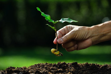 Farmer hand planting young plant with seed on the soil