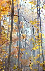 forest morning fog