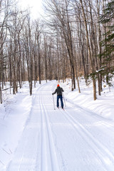 cross-country skiing in the middle of a forest covered of snow