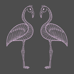 Coloring page with pink Flamingo birds, zentangle illustartion t