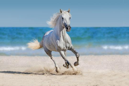 Horse run against the ocean