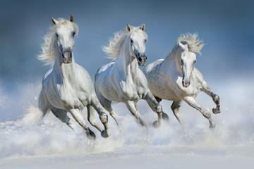 Trzy białe konie biegną galop w śniegu