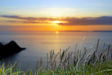 Canvas Prints sunset over loop head with the wild tall grass