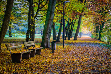 Beautiful autumn scene in park in golden morning light at sunrise,