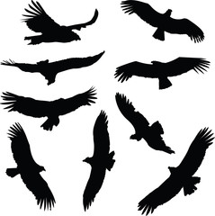A set of Condor illustration silhouettes.