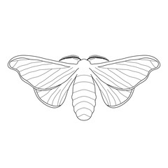 butterfly Bombyx mori.  Sketch of butterfly. butterfly isolated on white background