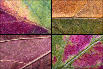 Background close up of autumn leaves texture