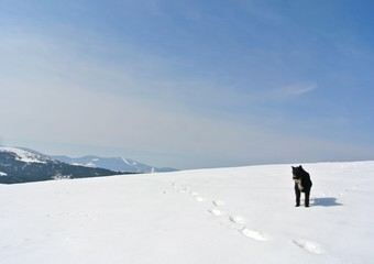 Lonely black dog standing in the snow, on a nice, crisp, sunny winter day, in the mountains. Snowy winter landscape with clear blue sky.