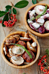 Fresh edible wild mushrooms