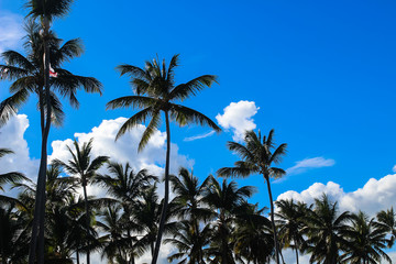 Пальмы на фоне летнего голубого неба и белых облаков