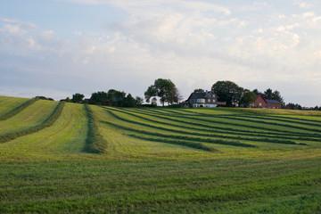 Rows of fresh cut grass on a farm field, Stavanger, Norway. Norwegian farm landscape.