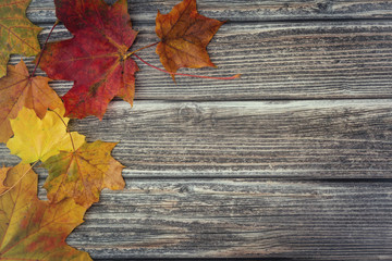 Autumn leaves on vintage wooden background