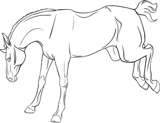 Coloring book with a horse