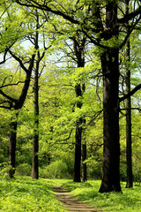 beautiful trees photographed